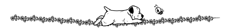 Section divider doodle of dog looking at a bee