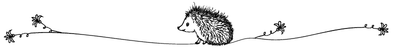 Section divider doodle of hedgehog looking away from flower